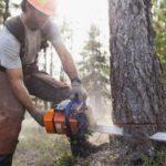 Обучение вальщика леса
